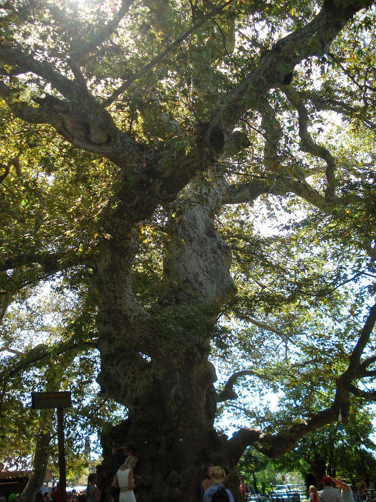 Krasi - Largest plane-tree of Crete