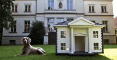 Dog-house-feature-image