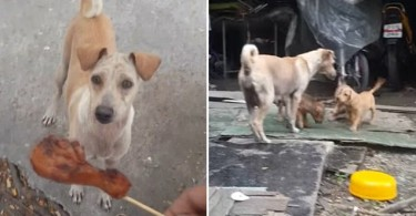 Mama Dog Begs, Brings Food Back to Pups in Bangkok